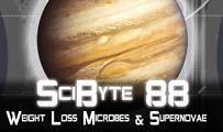 Weight Loss Microbes & Supernovae | SciByte 88