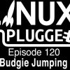 Budgie Jumping | LUP 120